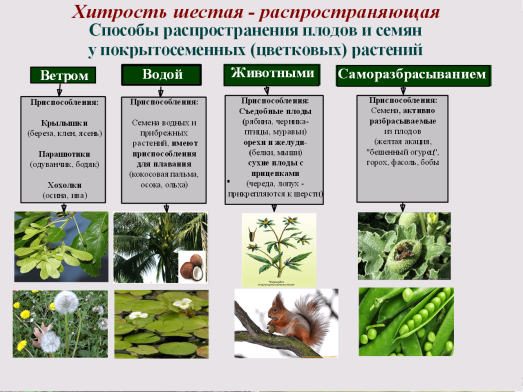 C:\Documents and Settings\test\Рабочий стол\Image.bmp