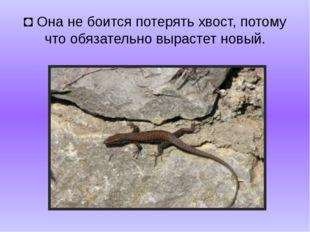 ◘Она не боится потерять хвост, потому что обязательно вырастет новый.