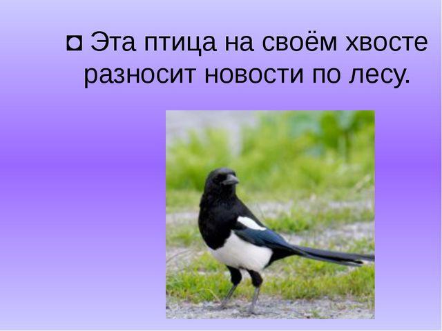 ◘Эта птица на своём хвосте разносит новости по лесу.