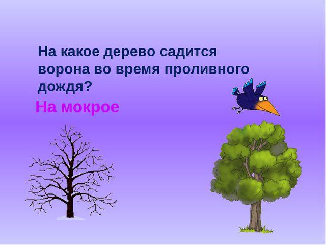 На какое дерево садится ворона во время проливного дождя? На мокрое