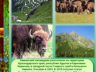 Кавказский заповедник Кавказский заповедник расположен на территории Краснода