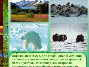 Заповедник остров Врангеля Первый арктический заповедник России, образован в