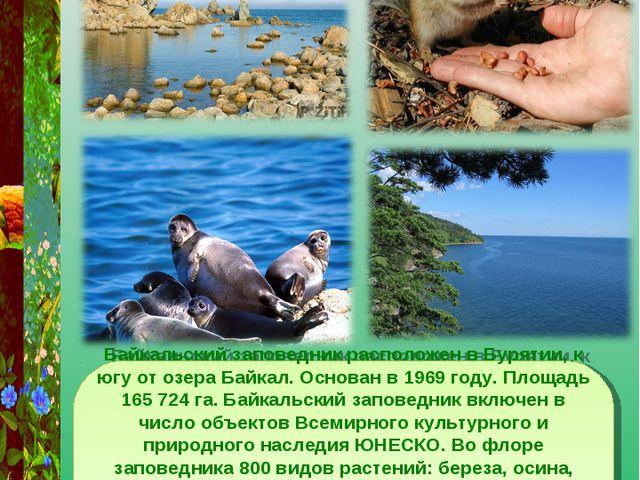 Байкальский заповедник Байкальский заповедник расположен в Бурятии, к югу от...