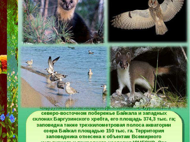 Баргузинский заповедник Баргузинский заповедник расположен в Бурятии на север...