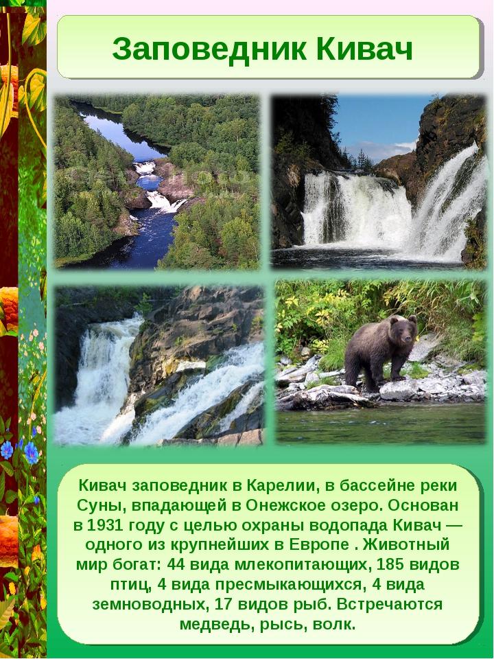 Заповедник Кивач Кивач заповедник в Карелии, в бассейне реки Суны, впадающей...