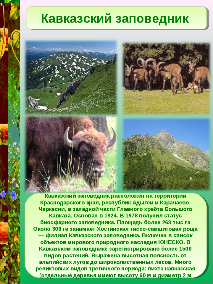 Кавказский заповедник Кавказский заповедник расположен на территории Краснода...