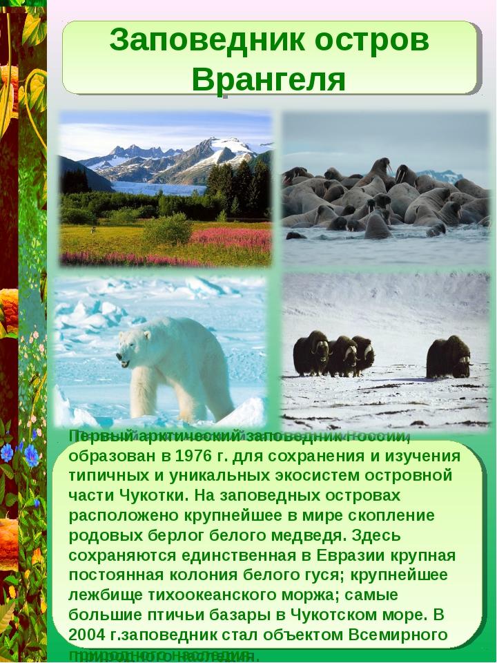 Заповедник остров Врангеля Первый арктический заповедник России, образован в...