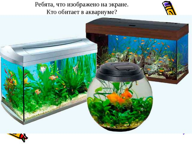 Ребята, что изображено на экране. Кто обитает в аквариуме?