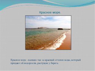 Красное море. Красное море –названо так за красный оттенок воды, который прид