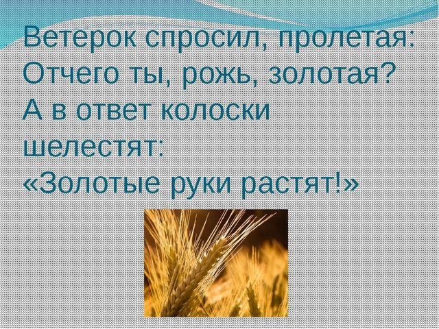 Ветерок спросил, пролетая: Отчего ты, рожь, золотая? А в ответ колоски шелест...