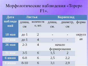 Морфологические наблюдения «Тореро F1». Дата наблюдений Листья Корнеплод длин