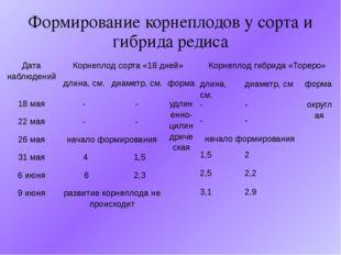 Формирование корнеплодов у сорта и гибрида редиса Дата наблюдений Корнеплод с