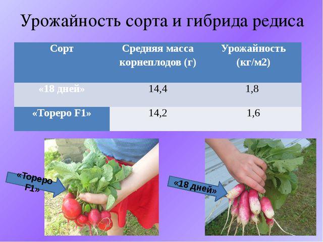 Урожайность сорта и гибрида редиса «Тореро F1» «18 дней» Сорт Средняя масса к...