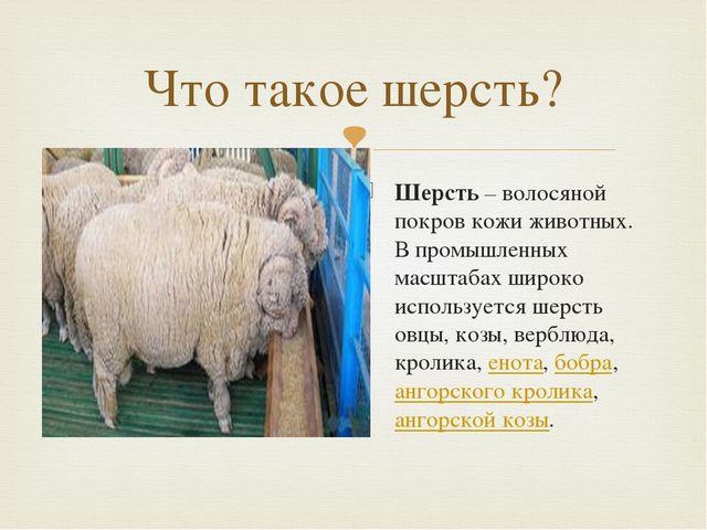 Что такое шерсть? Шерсть – волосяной покров кожи животных. В промышленных мас...