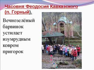 Часовня Феодосия Кавказского (п. Горный). Вечнозелёный барвинок устилает изум