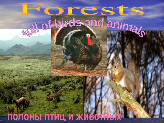 полоны птиц и животных