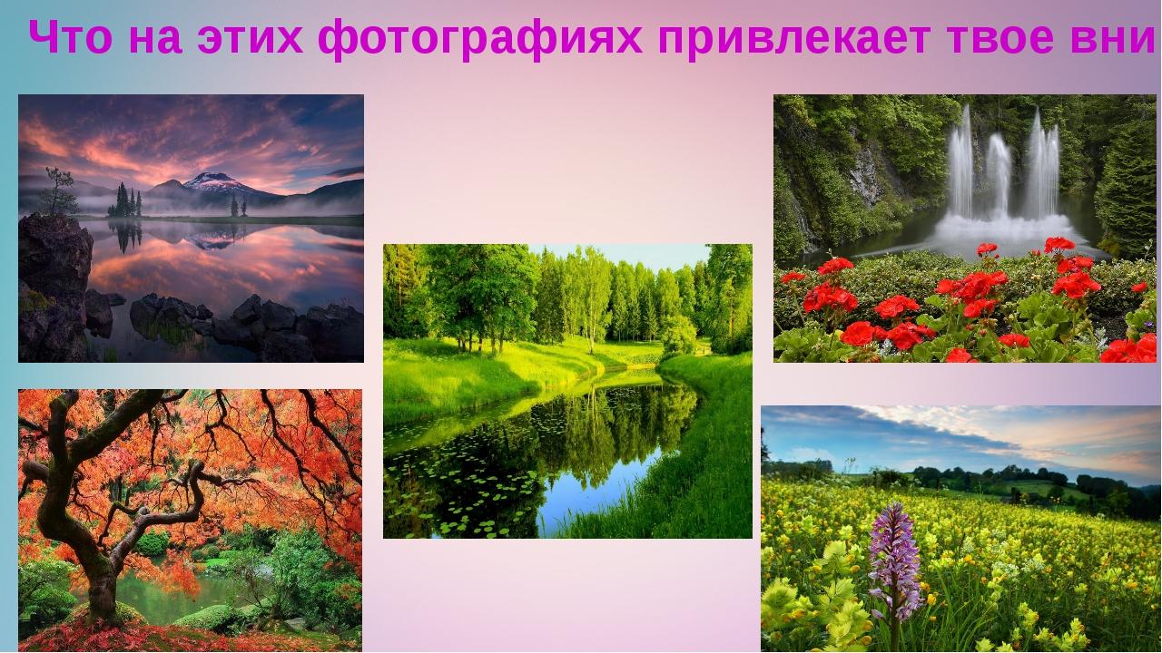Что на этих фотографиях привлекает твое внимание?