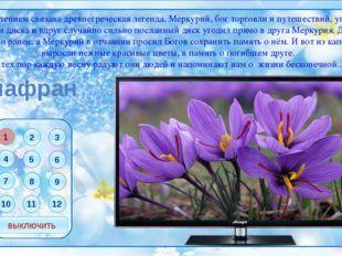 Рябчик русский Латинское название цветка переводится как шахматная доска. И