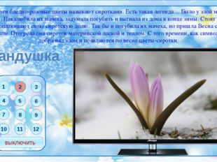 Фон презентации Телевизор ссылки Фон рамки и пульта Шафран Брандушка Горицвет