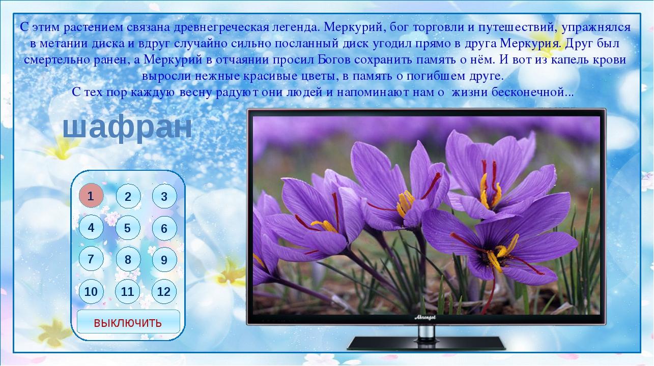 Рябчик русский Латинское название цветка переводится как шахматная доска. И...