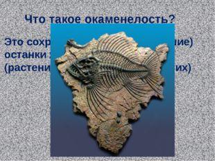 Что такое окаменелость? Это сохранившиеся (окаменевшие) останки живых организ