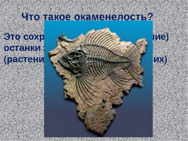 Что такое окаменелость? Это сохранившиеся (окаменевшие) останки живых организ...