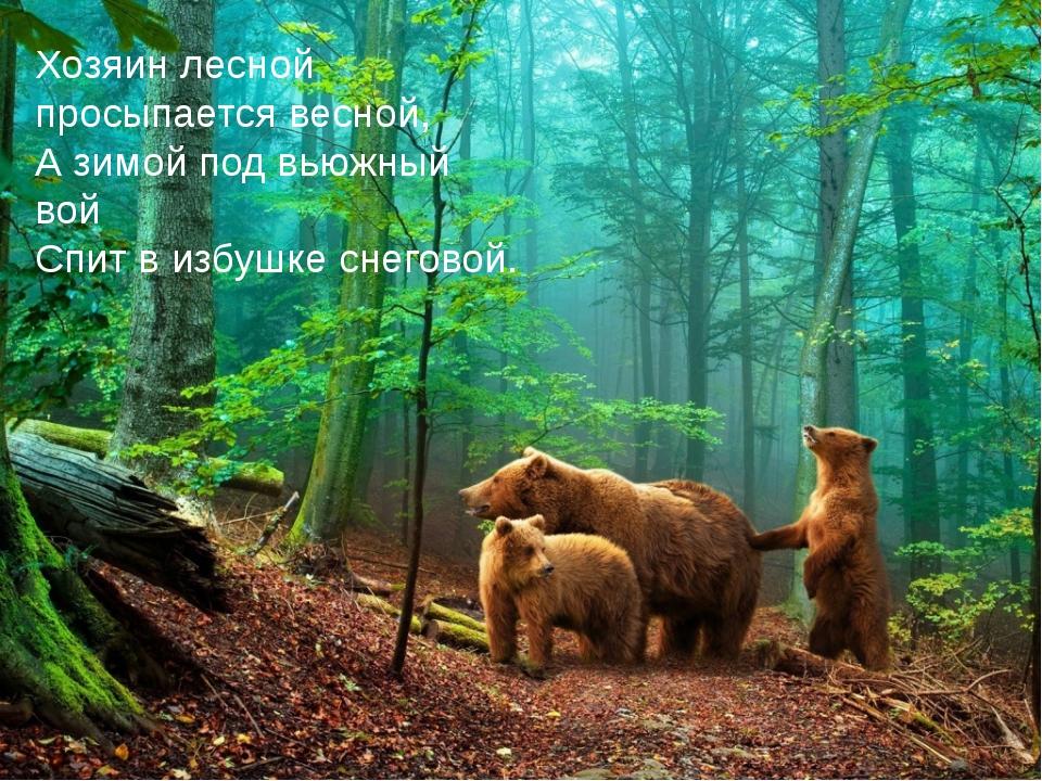 Хозяин лесной просыпается весной, А зимой под вьюжный вой Спит в избушке сн...