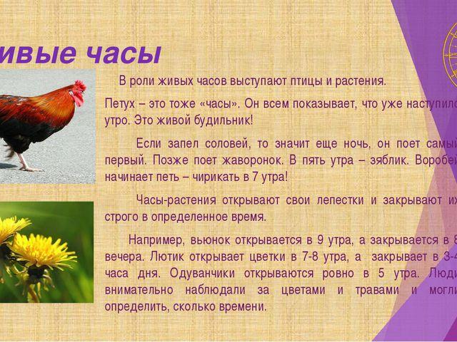 Живые часы В роли живых часов выступают птицы и растения. Петух – это тоже «ч...