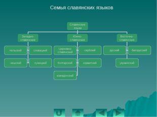 Алтайская языковая семья Языковая группа Народы языковой группы Тюркская Турк