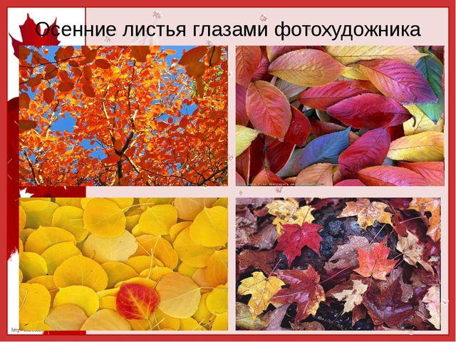 Осенние листья глазами фотохудожника http://linda6035.ucoz.ru/
