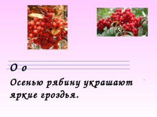 О о Осенью рябину украшают яркие гроздья.