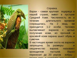 .  Справка. Варан - самая крупная ящерица в нашей стране, живет в пустыне Ср