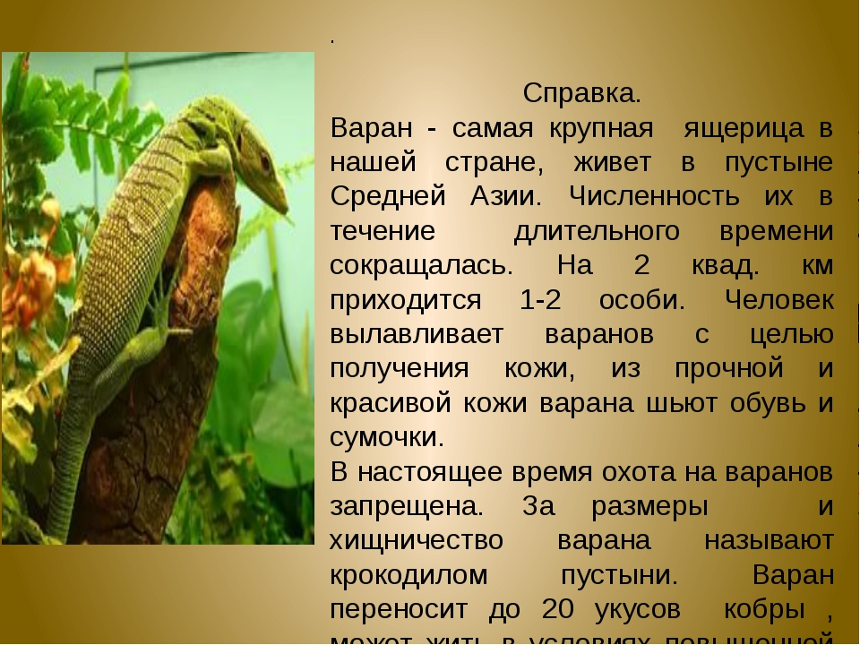 .  Справка. Варан - самая крупная ящерица в нашей стране, живет в пустыне Ср...