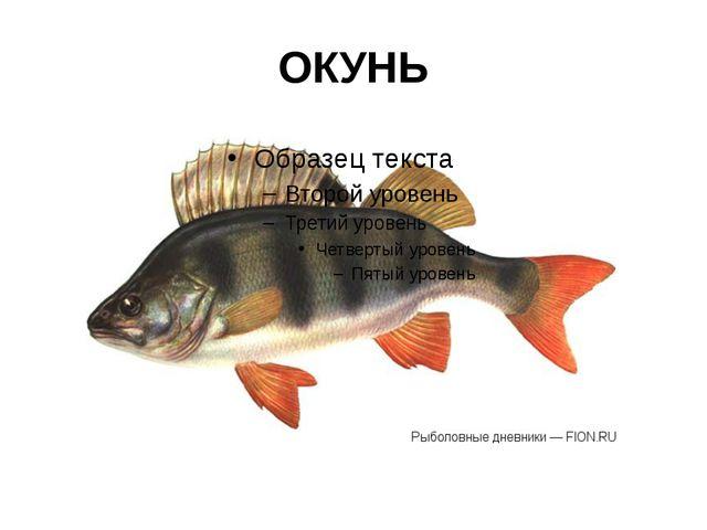 ОКУНЬ