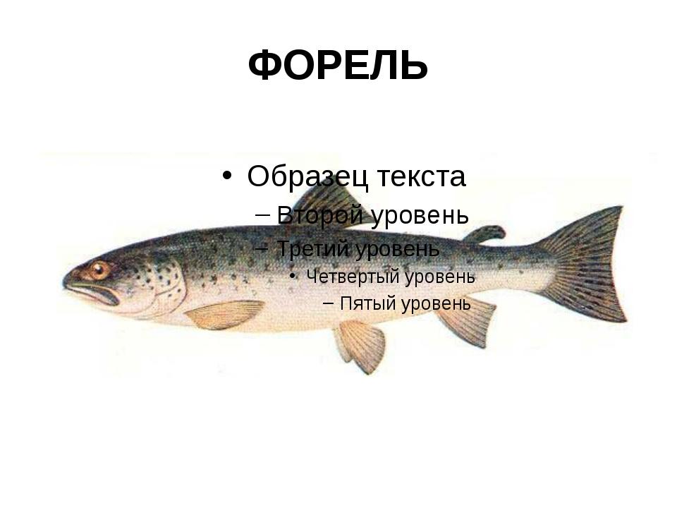 ФОРЕЛЬ