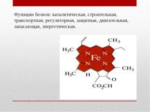 Функции белков: каталитическая, строительная, транспортная, регуляторная, защ
