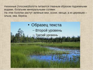Низинные (плоские)болота питаются главным образом подземными водами, богатыми