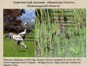 Комплексный заказник «Мшинское болото» Ленинградской области Заказник образов