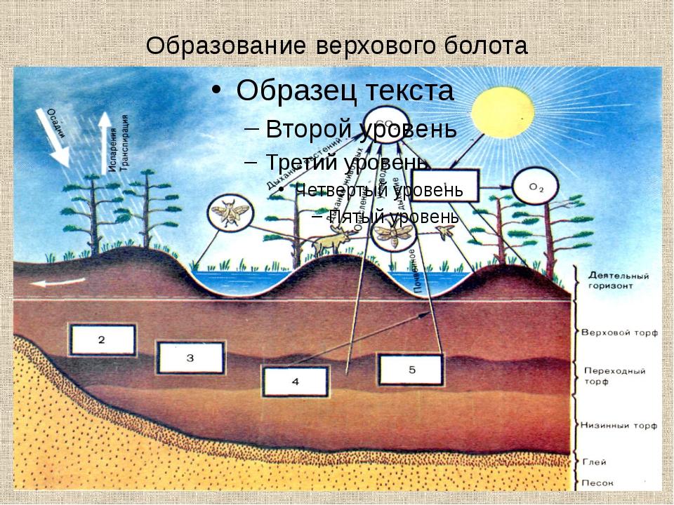 Образование верхового болота