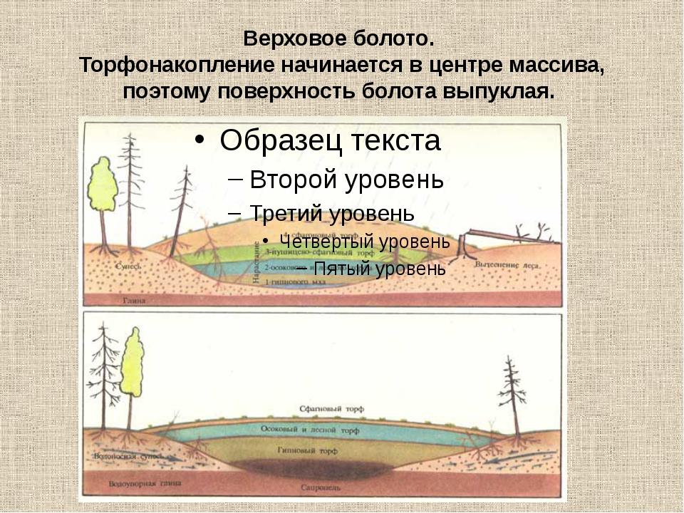 Верховое болото. Торфонакопление начинается в центре массива, поэтому поверхн...