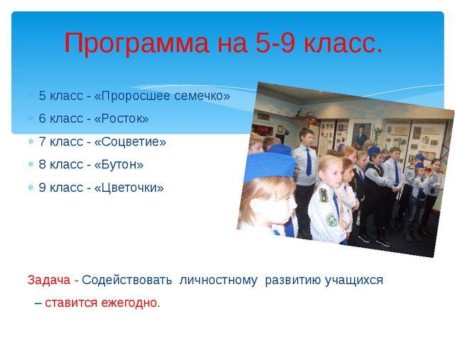 5 класс - «Проросшее семечко» 6 класс - «Росток» 7 класс - «Соцветие» 8 класс...