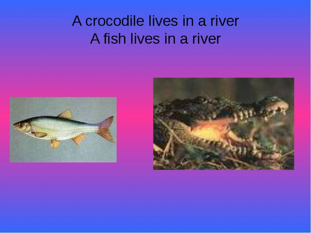 A crocodile lives in a river A fish lives in a river