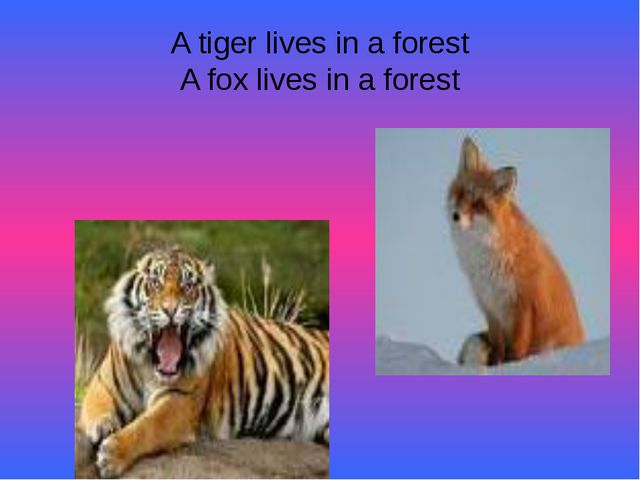 A tiger lives in a forest A fox lives in a forest
