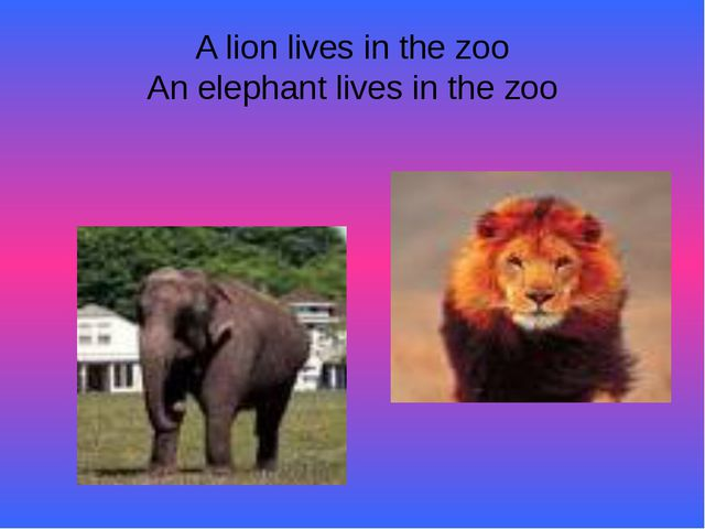 A lion lives in the zoo An elephant lives in the zoo