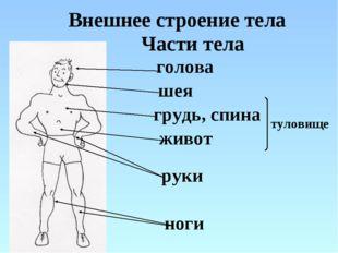 Внешнее строение тела голова шея руки ноги грудь, спина живот туловище Части