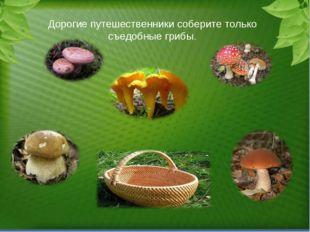 Дорогие путешественники соберите только съедобные грибы.