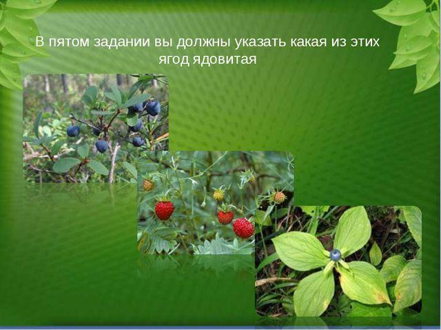 В пятом задании вы должны указать какая из этих ягод ядовитая