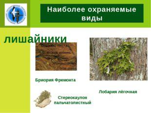Наиболее охраняемые виды лишайники Бриория Фремонта Лобария лёгочная Стереока