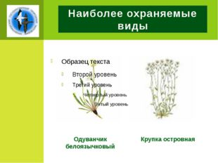 Наиболее охраняемые виды Одуванчик белоязычковый Крупка островная