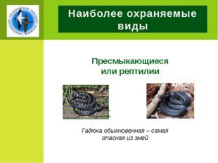 Наиболее охраняемые виды Пресмыкающиеся или рептилии Гадюка обыкновенная – са